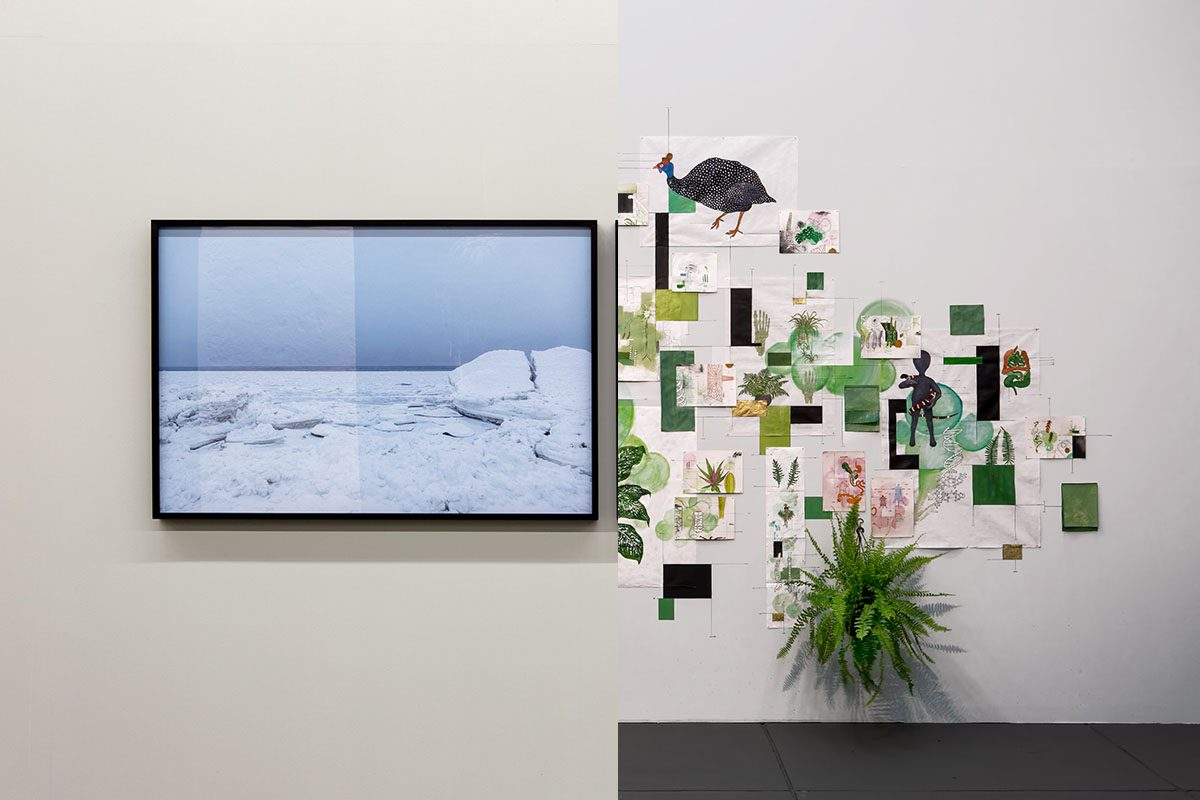 Do mar gélido às plantas naturais: temáticas diferentes conversam na Exposição 20/20