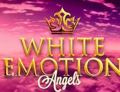 Festa White
