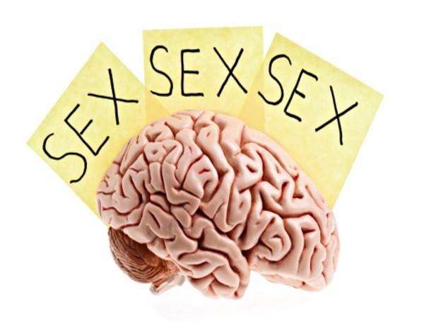 4f95663d3 Ações do sexo no cérebro humano - Sexo e Prazer