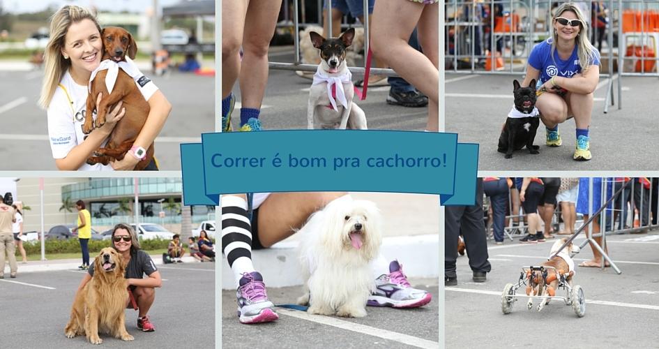 Correndo Pra Cachorro Corrida Pet Cães