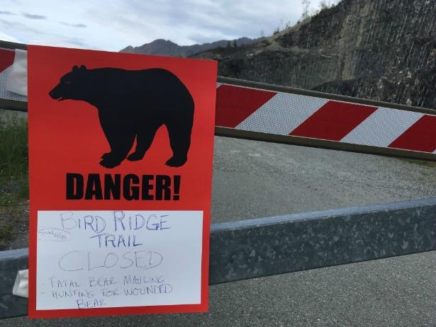 Corredor morre após ser atacado por urso em prova de montanha no Alasca