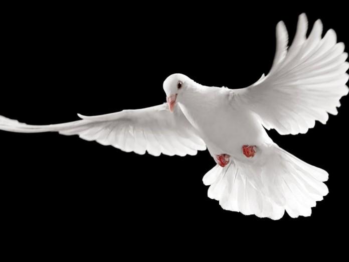 A-Minha-Paz-vos-dou-1-696x522