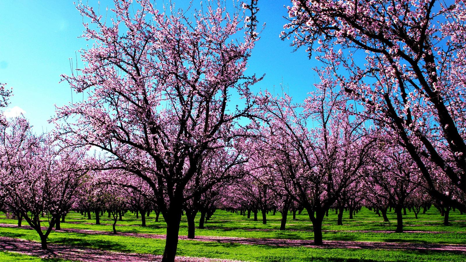 A estação mais florida do ano chegou! Aprecie algumas das ...