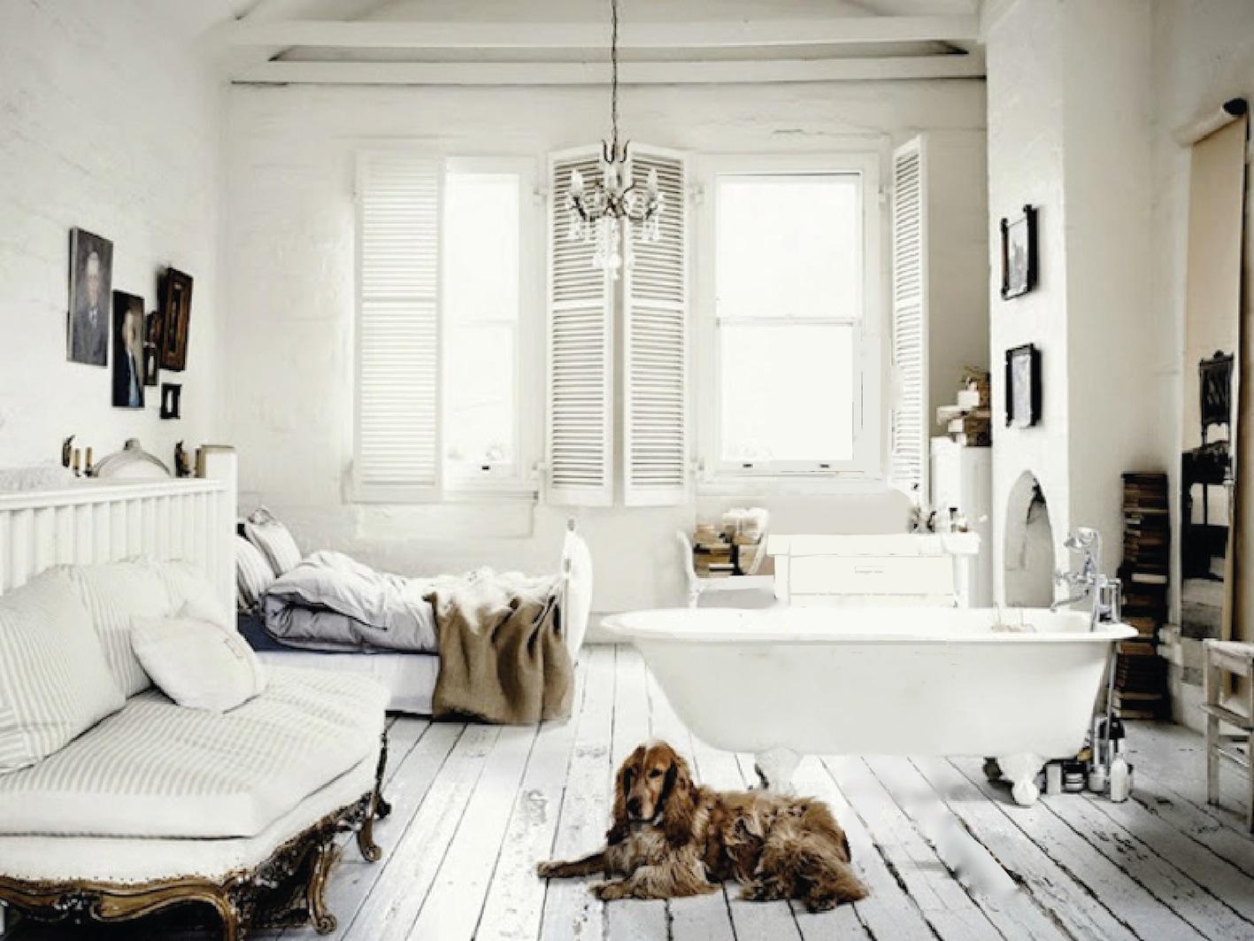 Muito estilo para um cachorro