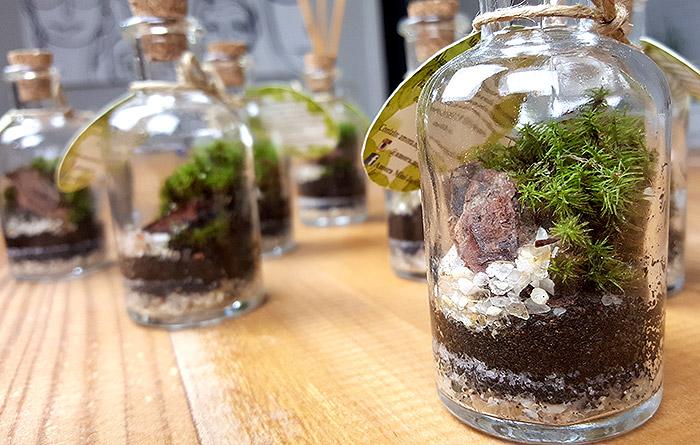 mini jardins no vidro:Jardim no pote: tendência que faz bem para o nosso corpo e