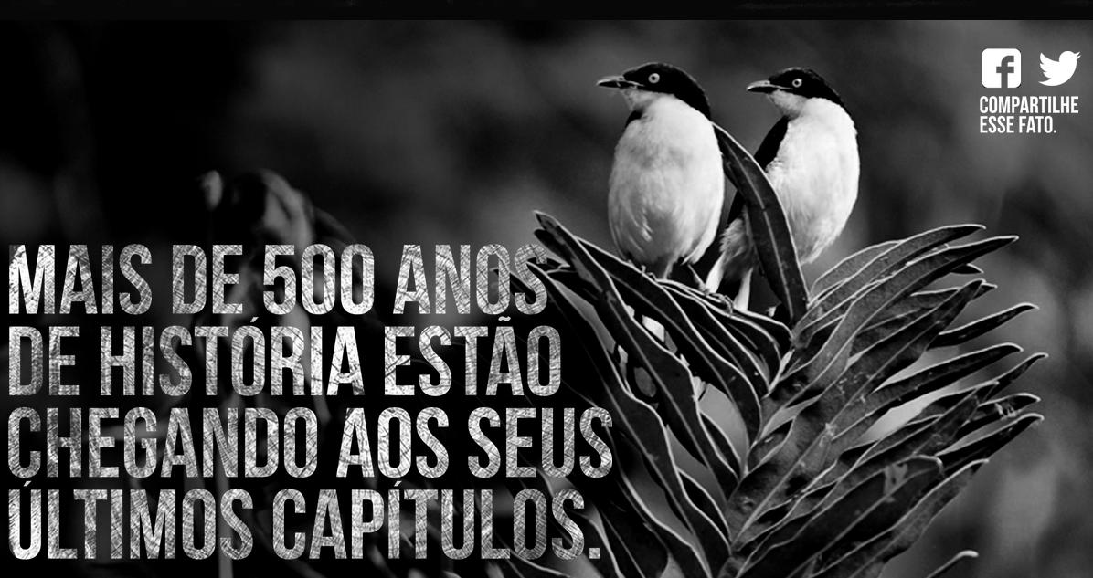 Campanha extrai música de pau-brasil para ajudar a salvar a Mata Atlântica