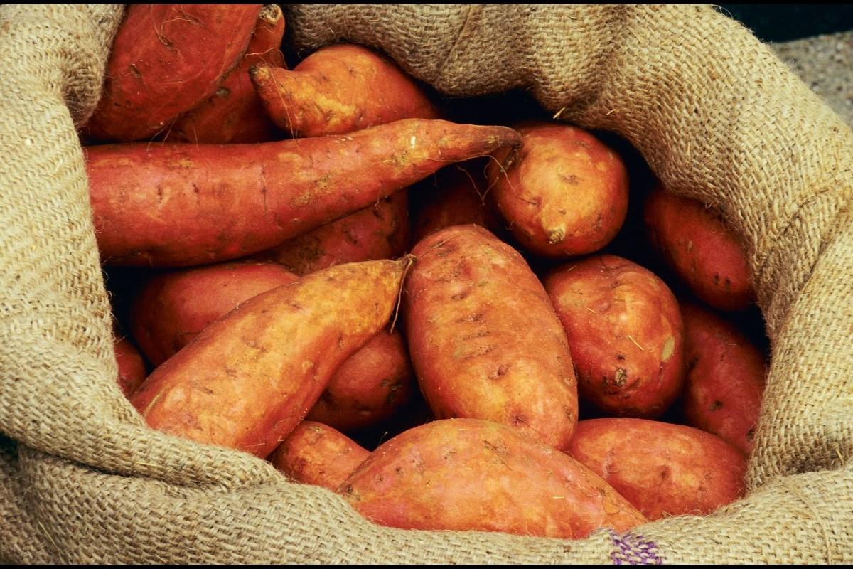Quais os beneficios da batata doce para saude