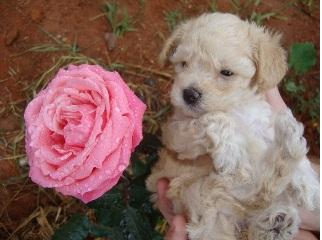 Cachorro posa para foto fofa - Pet Blog