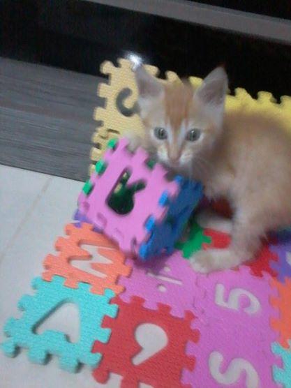 Garfield fugiu do filme! - Pet Blog