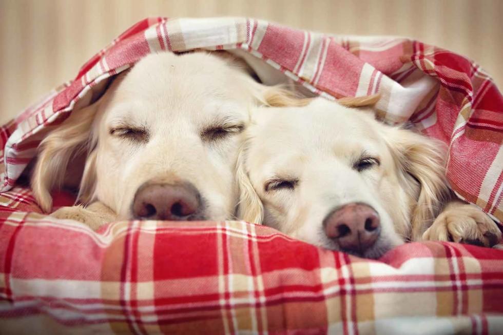 Confira dicas para prevenir doenças nos pets nesse inverno - Petblog ... 07c8a07fac1