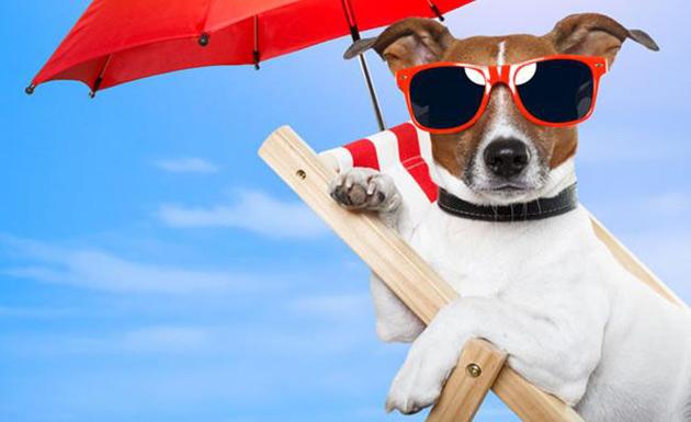 Animal de estimação requer cuidados especiais no Verão