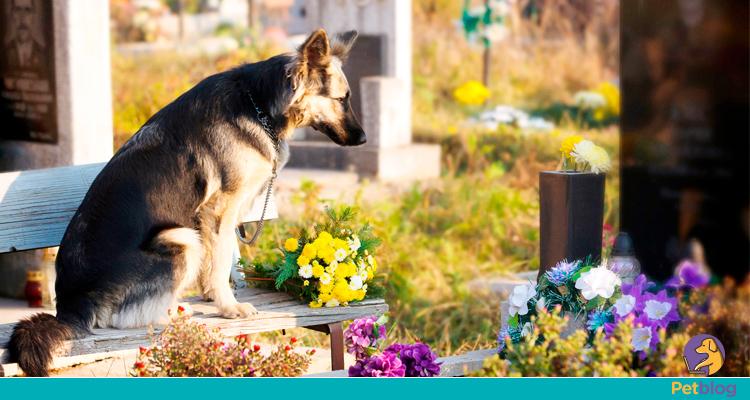 Cemitérios para pets: mais conforto na hora da partida