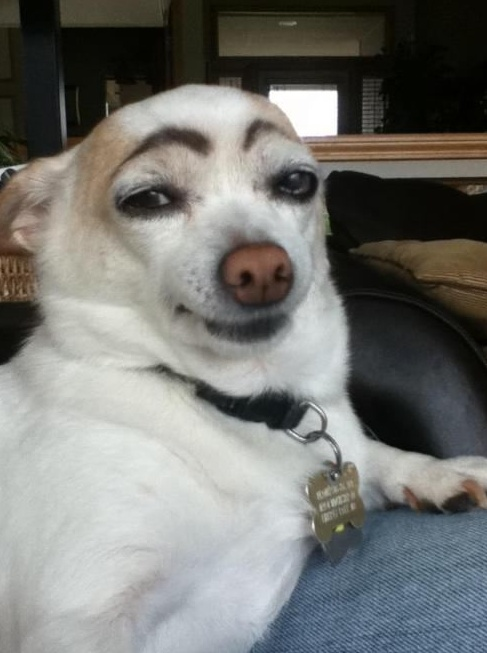 dog eyebrow 2