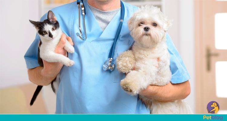 Check up em cães e gatos