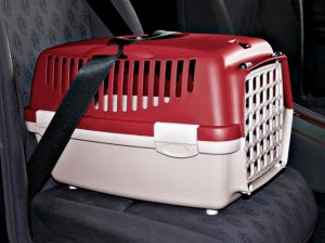 Transporte de pets no carro