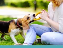 Escolha o brinquedo ideal para cada fase da vida do cachorro
