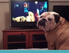 bulldog filme de terror