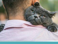 Sinais de que o gato é feliz