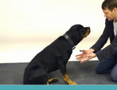 cachorros reagem a magica