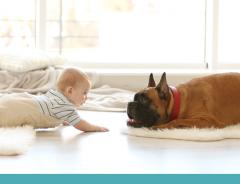 Como preparar os cachorros para a chegada de um bebê em casa