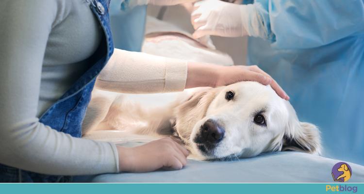 como funciona a terapia intensiva veterinária