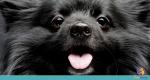 Como funcionam os sentidos dos cães?