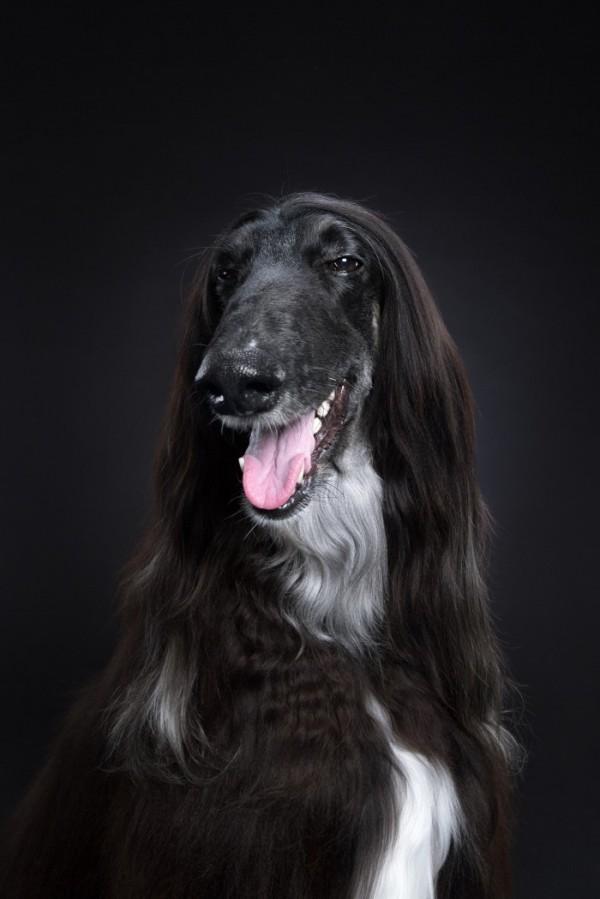 Dog Show Alexander Khokhlov