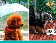 invenções para pets