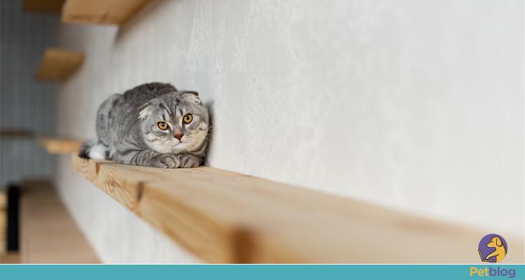 adaptar a casa para gato