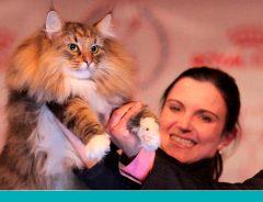 gato brasileiro World Cat Show 2017