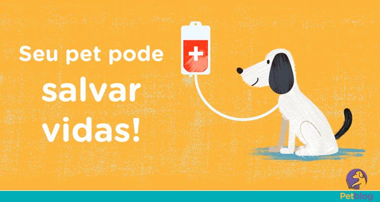 Doação de sangue cães e gatos