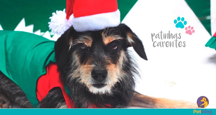Patinhas Carentes promove solidariedade com Natal Animal. Ajude!