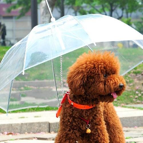 invenções para pets guarda chuva