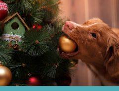 decoração de Natal com pets