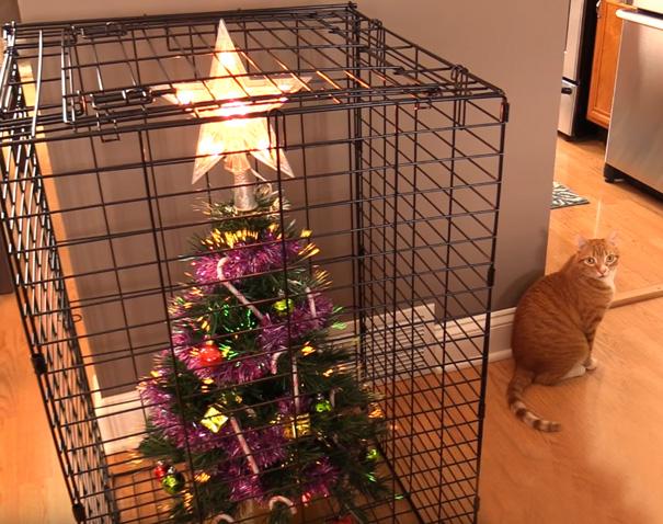 decoração de natal pets