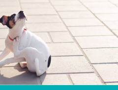 dermatite atopica em cães