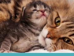 Pet também é mãe: cuidados com cadelas e gatas da gestação ao desmame