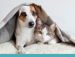 Inverno chegando: cães e gatos exigem cuidados especiais