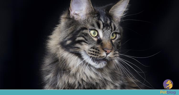 6 produtos caseiros que podem matar o seu gato