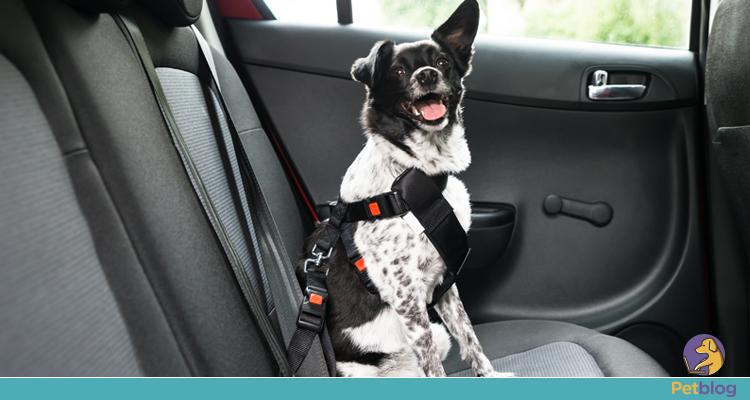 Pets no trânsito e a segurança para você e ele