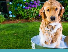 Higiene dos pet: Cuidados importantes!