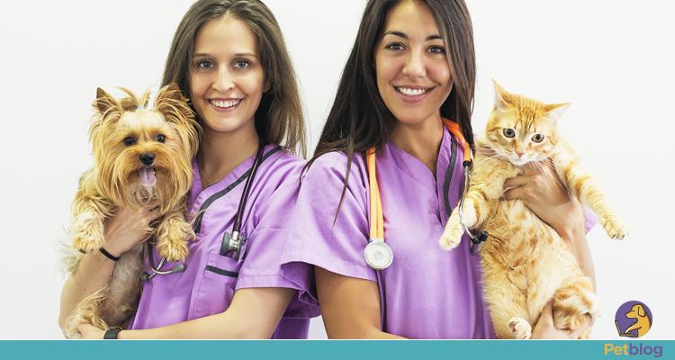 Prevenção do câncer de mama em cadelas e gatas
