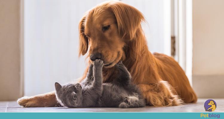 Pets ajudam a combater a solidão