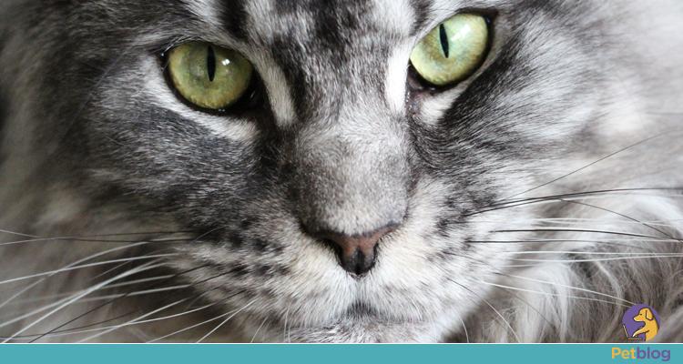Como funciona a visão dos gatos?
