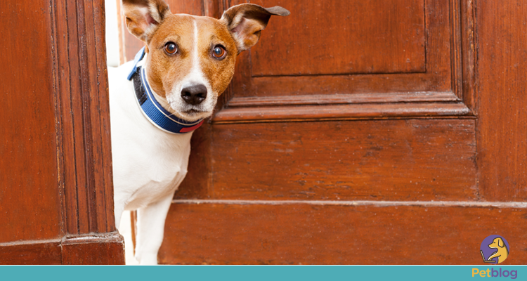 O que pode e o que não pode na hora de alugar um imóvel com seu pet?