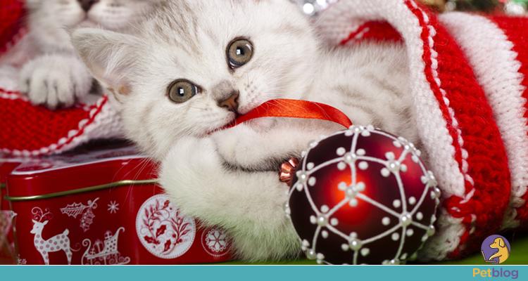 Como proteger a árvore de Natal dos gatos?