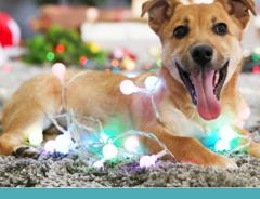 Festa de Natal com seu pet: Nada de deixá-lo de fora!