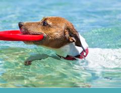 Ensinar seu cachorro a nadar aos poucos!