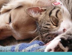 Expectativa de vida dos pets cresceu nas últimas décadas!