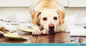 Dicas de limpeza para quem tem pets em casa